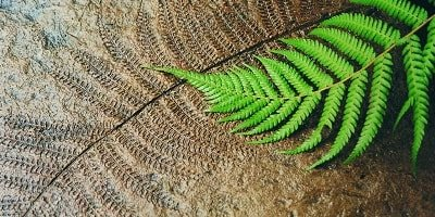 LM Scofield produces specialized decorative concrete products as seen here a fern leaf imprint in concrete.