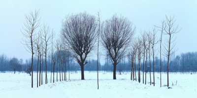 Trees in a field surrounded by snow.