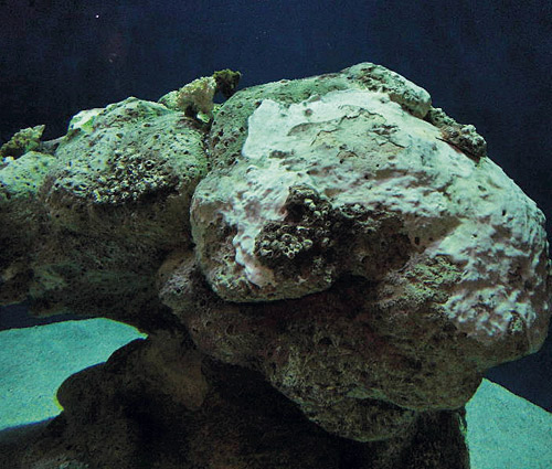 Under water rock sculpted of concrete seems to have been underwater for centuries.