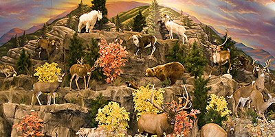 Decorative concrete displays in Cabela's