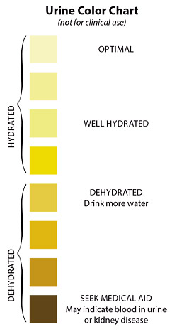 urine color chart