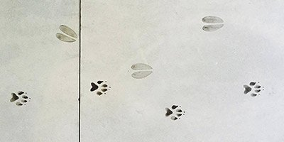Schulz and de Wit also installed deer and coyote tracks as a wayfinding system that runs from the classrooms to the bathroom in a realistic pattern that looks like the coyote is chasing the deer in concrete.