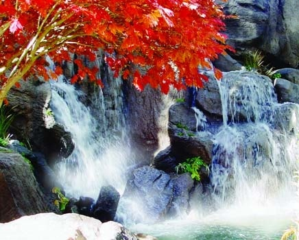 Red foliage from a Maple tree glows as it hangs over the GFRC water fall in Lake Tahoe.