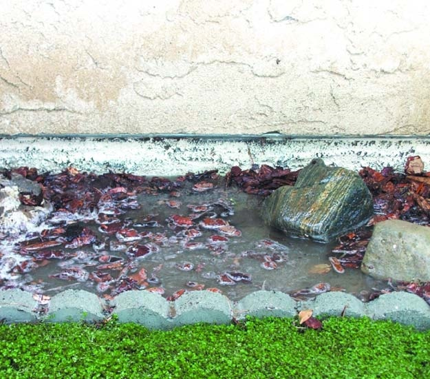 Water logged flowerbeds can be fixed by adding the appropriate drain to remove the water.