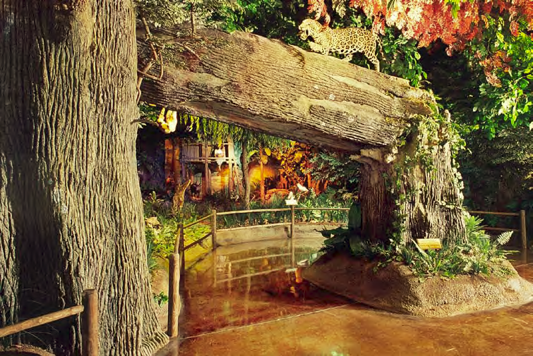 The Rainforest display in the Museum at Rolling Hills Wildlife Adventure in Salina, Kan.