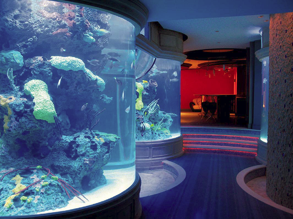 Aquarium with concrete features inside.
