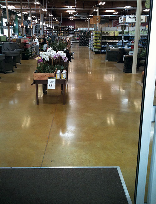 Polished concrete floor in a high traffic area near the cash registers in a grocery store. Cart with flowers over polished concrete floors.