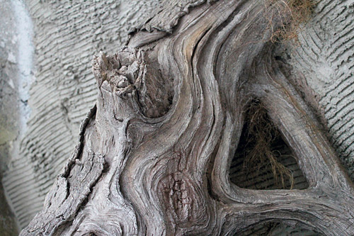 Step By Step Guide To Tree And Root Construction With