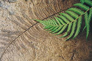 textured and imprinted concrete with texture skin and live fern
