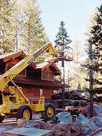 A large fake fir tree stands near a log cabin in Lake Tahoe. The evergreen tree is made from GFRC.