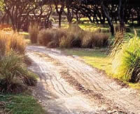 Disney World Animal Kingdom- Although the roads at Disney's Kilimanjaro Safari game preserve look like crude unpaved roadways, they actually are crafted out of concrete.