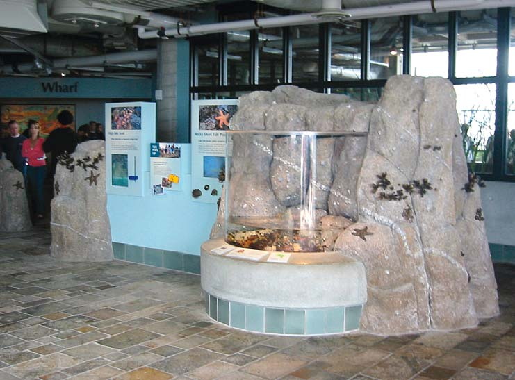 See through glass viewing area for sea creatures surrounded by had carved concrete rocks.