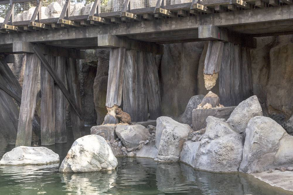 Detailed faux rocks and wood that creates a themed look at an amusement park