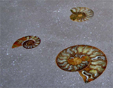 Decorative Concrete Countertop with snails shell shapes embedded into it.